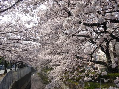 春爛漫の「川口グリーンセンター」♪ Vol.1 周辺の桜は満開♪