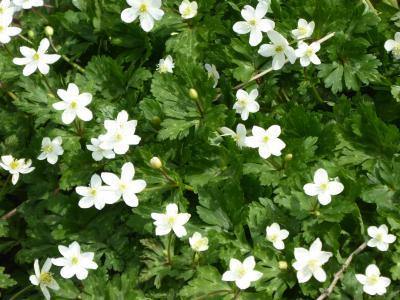 春爛漫の「川口グリーンセンター」♪ Vol.4 春の草花の競演は美しい♪