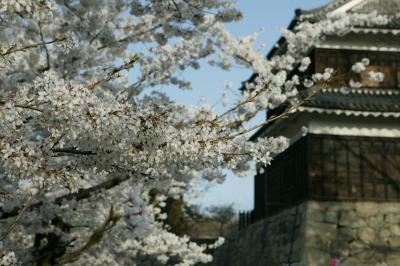 上田城 さくら千本祭り