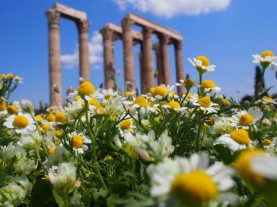 春のギリシャ サントリーニ島・アテネ  アテネ編①