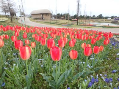 春の淡路島へ  お花と温泉を満喫 日帰りの旅