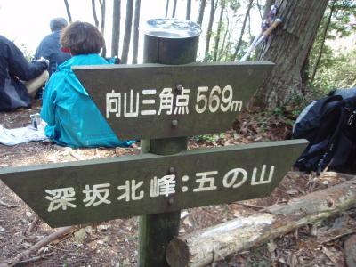 ヒカゲツツジを求め向山に登りました