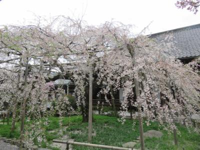 人に会わない京都 (山科 三尾)と奈良