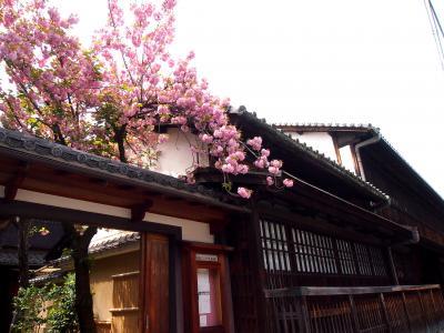 京都・島原・角屋さんの 八重桜 ・・・・ お二階からの 眺めは 素晴らしい!