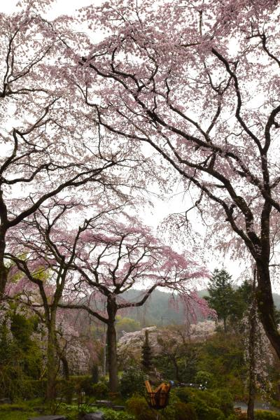 ひとりお花見部 2017③ 嵐電で車折神社~佐野藤衛門邸~広沢池