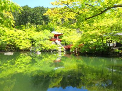 青もみじに誘われ京都へ~GW前は新緑ひとり占め