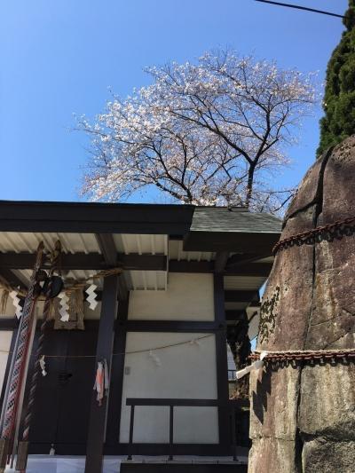 盛岡市内で桜散策