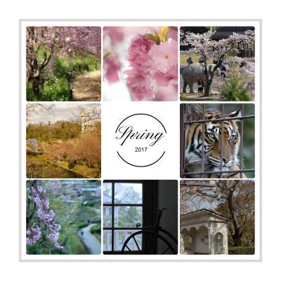 桜追いかけて・・・愛知の観光名所 東山動植物園と博物館 明治村