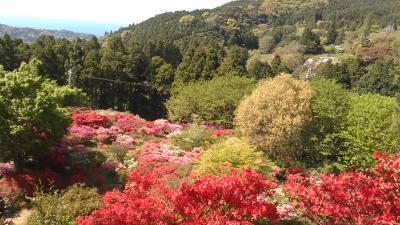糸島つつじ祭りと花めぐりと優雅なランチ