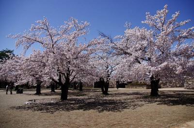 長野・松代城址で花見 そして 小谷温泉へ
