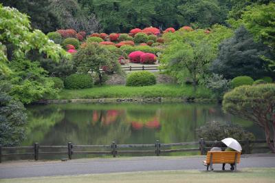 ぶらっと新宿御苑 #真っ赤に盛り上がるツツジ山。モミジの新緑もまだまだ桜も楽しめました。