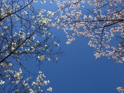 春色を追いかけて~群馬へ1泊2日旅~後編