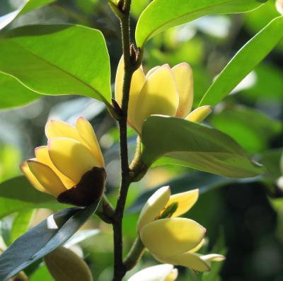 Japan  ELLiEさんに再訪を約束した赤塚植物園へ ~ミツバチばあやの冒険~
