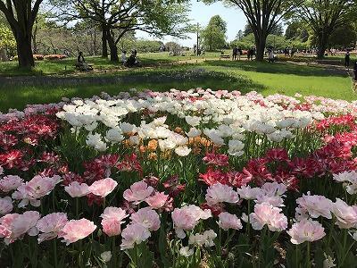 心ときめく春の一日・花の世界昭和記念公園に。