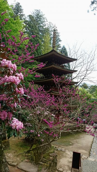 花の咲く奈良を訪ねて。