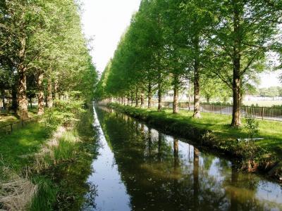 今朝の早朝ウォーキングは加須市の花崎公園でウォーキングとフリーマーケットを歩く