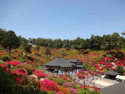 新緑の青梅丘陵と花の寺 塩船観音寺