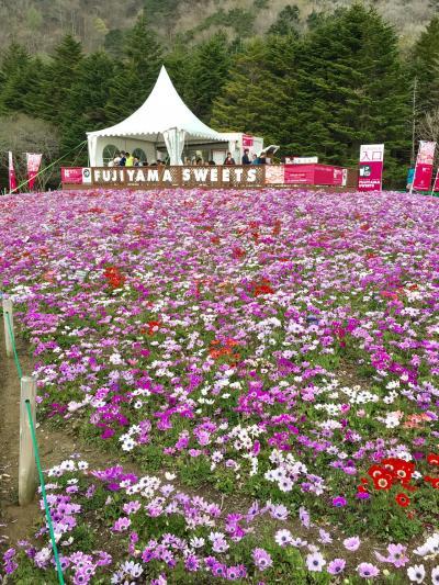 富士山芝桜まつりバスツアー