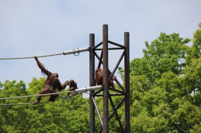 GWは近場でgo-④ 多摩動物公園と高幡不動