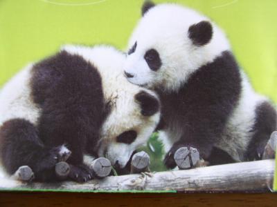 パンダに会い、川劇の妙技に感嘆!