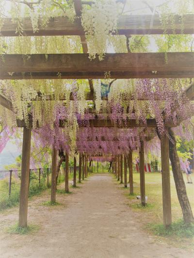和気公園の藤に癒され 激渋共同湯にしびれ 温泉付き戸建湯治宿で自炊の一泊二日旅