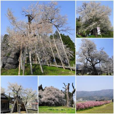 松之山・赤湯・蔵王・青根・妙高 温泉と桜と新緑をめぐる旅(3)新緑ドライブと置賜さくら回廊巡り