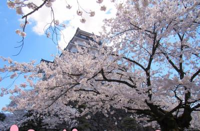 会津若松鶴ヶ城も桜が満開でした。花言葉「純潔、優れた美人」やっぱり桜には心惹かれます。