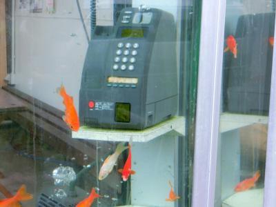 金魚、金魚、金魚の旅、ついでにシカも(奈良・大和郡山)