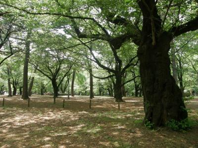 早朝ウォーキング・・・⑤大宮公園を歩く