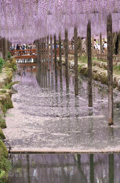 愛知の藤の人気スポットを訪ねる♪ 津島天王川公園&曼荼羅寺公園