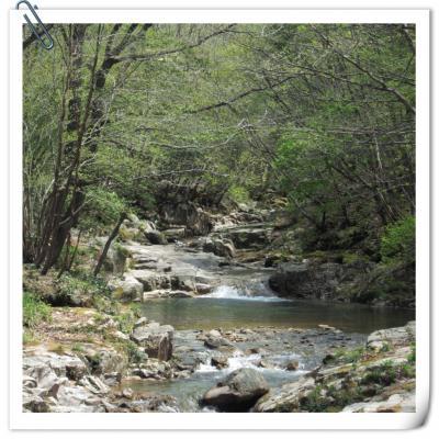 森と清流のウォーキング~季節を楽しむ♪吉和高原「魅惑の里」へ~