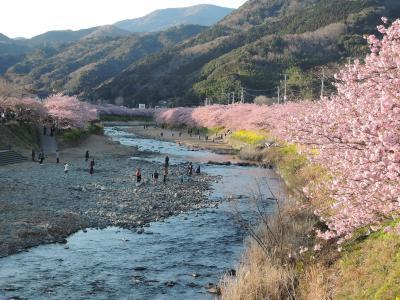 河津桜と景色・温泉は絶好調でも、ご飯は予想どおりの大外れ