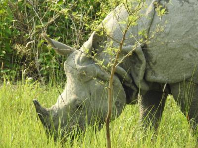 機内泊無しで行く、ヒマラヤ山群、世界遺産チトワン国立公園と古都めぐり8日間