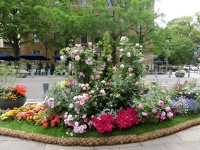 忙中閑あり(その2) 日本大通りはバラの香りに包まれて…