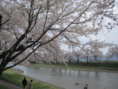 八乙女公園、道の駅なかせんの桜