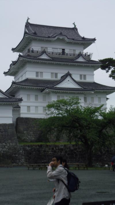 神奈川県小田原城 : 松丸太の基礎上に積まれた石垣を瞥見