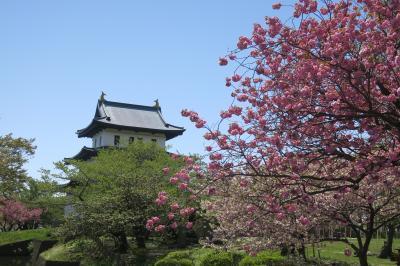 お花見前線を追いかけて函館へ(松前城での花見)