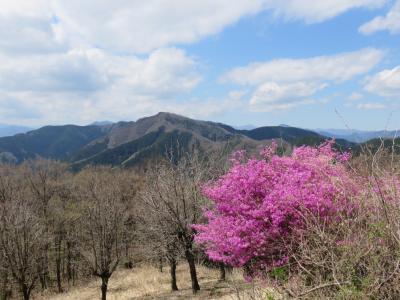春の生藤山~相模湖駅
