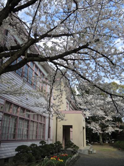 『桜見物は、日野「高幡不動尊」へ。 「府中の森公園」で、古民家散歩。 アンティーク・・に囲まれて、シーフード・ランチ』