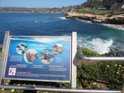 """北米西海岸のサンタモニカビーチとサンディエゴのパシフィックビーチを""""どうでしょう""""みたいにブラ歩きの旅。その4; 今日は、西海岸では有名なラ・ホーヤ・コーブ探索だ。海獣と一緒に遊べるのかな?の巻。"""