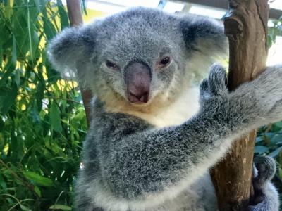 8歳子連れシドニー(母子旅行):動物園3連発の旅