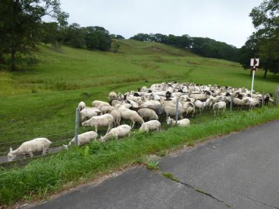 北海道 道東の旅 ~もこもこ羊を探して~