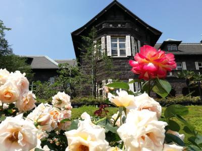 旧古河庭園の春バラ 2017