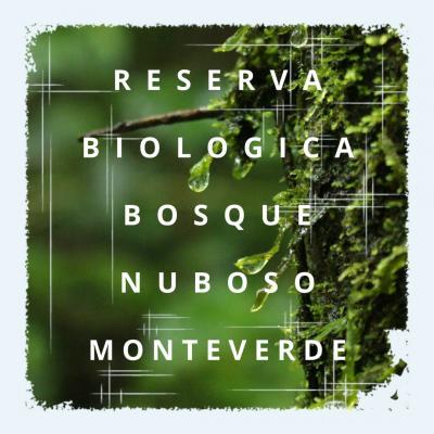 コスタリカ旅行 Day4 モンテベルデ自然保護区でびしょ濡れ森林浴
