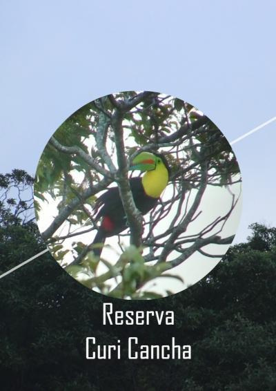 コスタリカ旅行 Day5 クリ・カンチャ保護区で野鳥観察