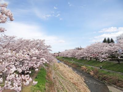 花の八王子 南浅川桜並木と都立陵南公園