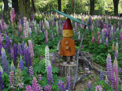 初めて行った森林公園でルピナスは見れたけれど、暑くて広すぎて撤退・・・