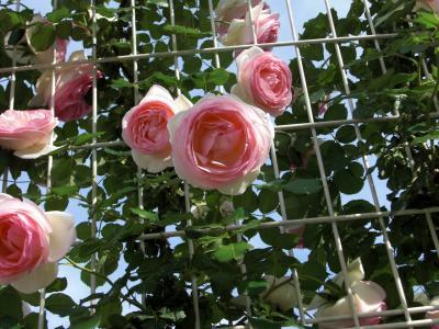 妹の誕生日に母が撮ったPhoto「花」のプレゼント♪~蒜山と福山~