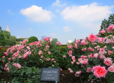 新宿御苑のバラとお行儀の悪いmoto