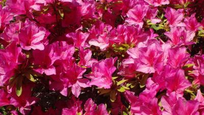 伊丹市荒牧下の池緑地に咲く花。